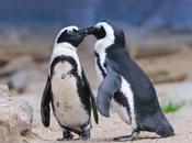 Pinguini innamorati: separati bene della specie