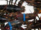 Vendita animali vivi nelle pescherie degli ipermercati