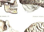 genomi degli Uomini scimpanzé