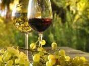 vino naturale compra Etica Vitis