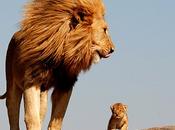 leone quello vero