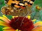 L'ordine implicito dharma) 'grande [poema dei] bh...