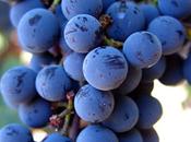 Gael Bec: Sessioni private degustazioni vini Barcellona
