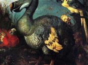 Animali estinti: Dodo