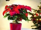 regalo green rosso Natale