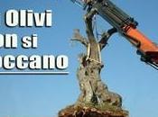 Consiglieri della Regione Puglia spiantare Olivo Monumentale basta silenzio assenso