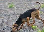razze canine italiane Agnese Spaziani