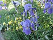 road: giardino degli iris
