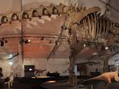 Giganti Passato Dinosauri