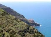 piedi Cinque Terre