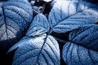 Chimica freddo: ghiaccio tutte salse