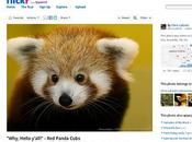 Firefox Aggiornamento gratis Android Tablet Smartphone Video Download