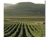 Settore vitivinicolo: nuovi bandi della Regione Sicilia