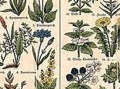 Tutto sulle piante medicinali