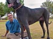 Giant george: ecco cane piu' grande mondo