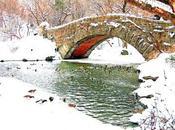 dove andranno dormire anatre Central Park durante l'inverno?