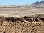 boschi pietrificati della Patagonia Argentina