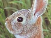 collina Conigli Richard Adams