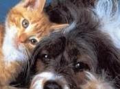 chiudono veterinario poco pulito