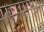 Nomi Cognomi votato Legge infame vivisezione