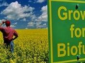 crisi? biocarburanti milioni posti lavoro