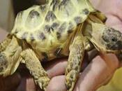 Tartaruga zampe teste