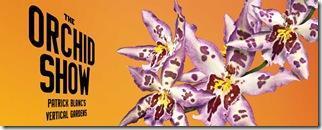 parete orchidee