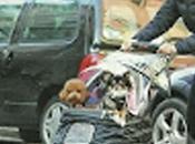 Rosita Celentano porta cani passeggio.... carozzina