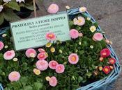 Modena fiore- parte
