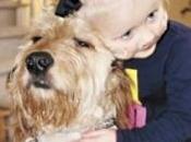 storia Gibbs, cagnolino tiene vita bimba anni