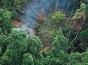 Cambogia: deforestazione west