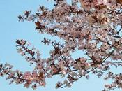 Primavera d'intorno…
